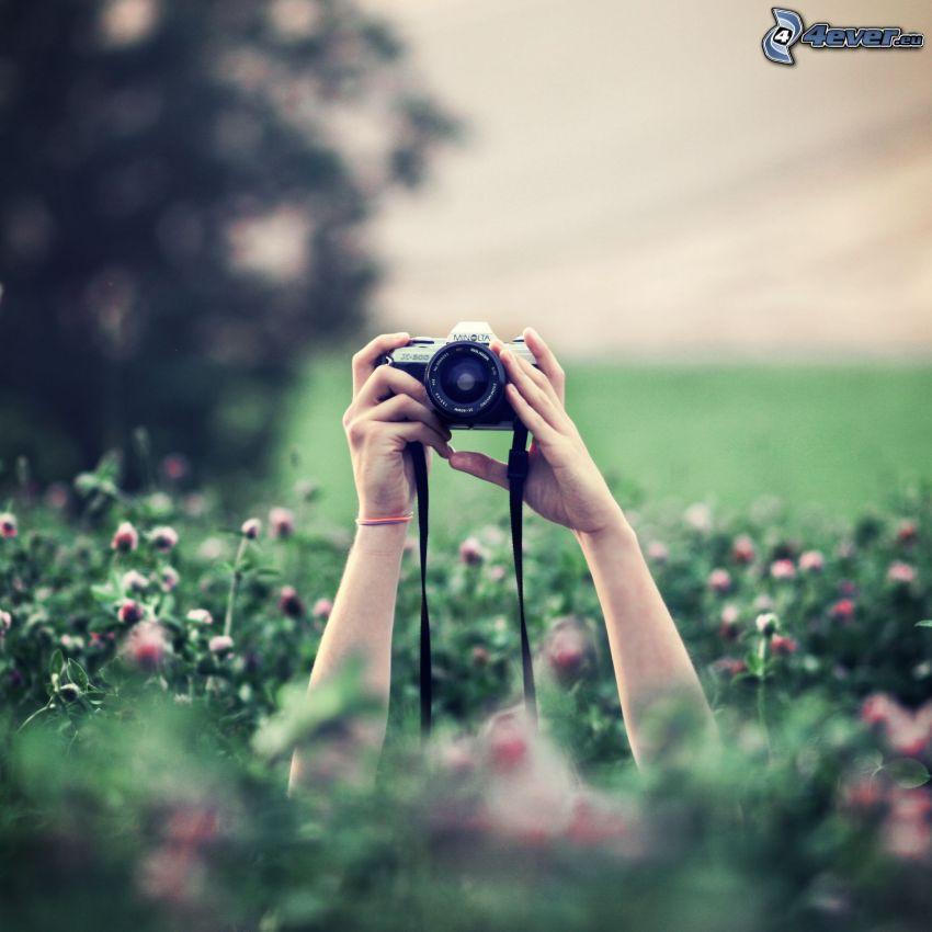 fényképezőgép, kezek, rét