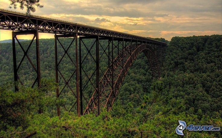 New River Gorge Bridge, erdő