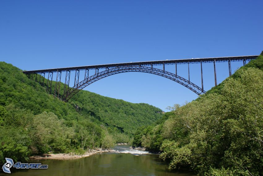 New River Gorge Bridge, folyó, erdő