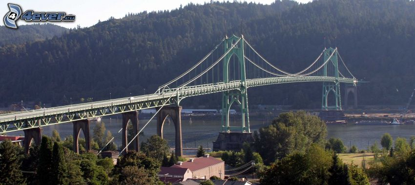St. Johns Bridge, erdő