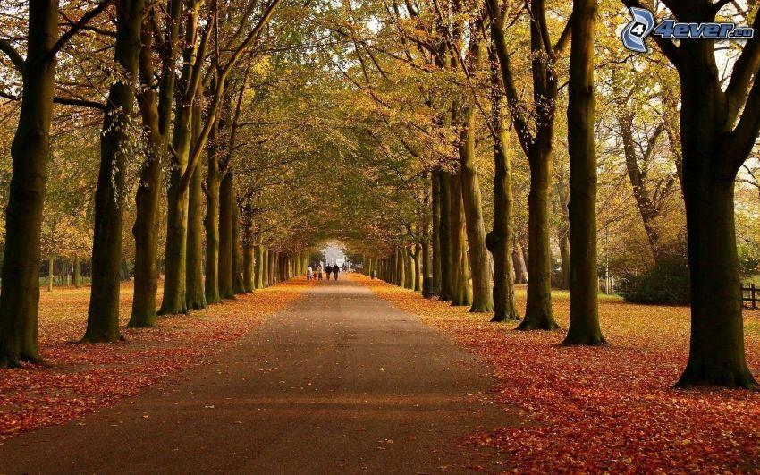 őszi park, út, őszi levelek