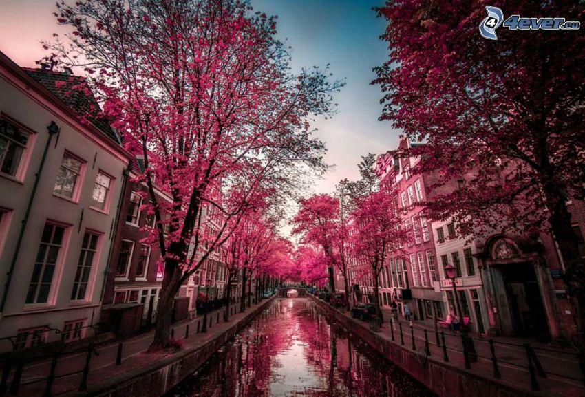 csatorna, lila fák, Amsterdam