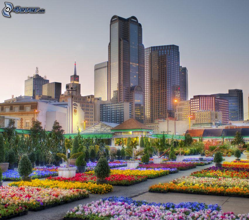 Dallas, kert, színes virágok, felhőkarcolók