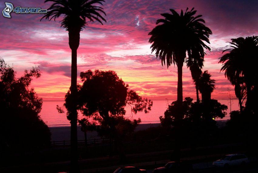 napnyugta után, pálmafák, fák sziluettjei, lila égbolt