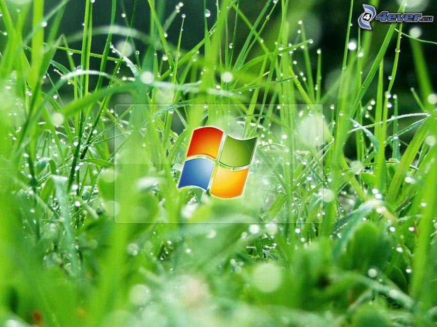 Windows 7, fűszálak, harmatos fű