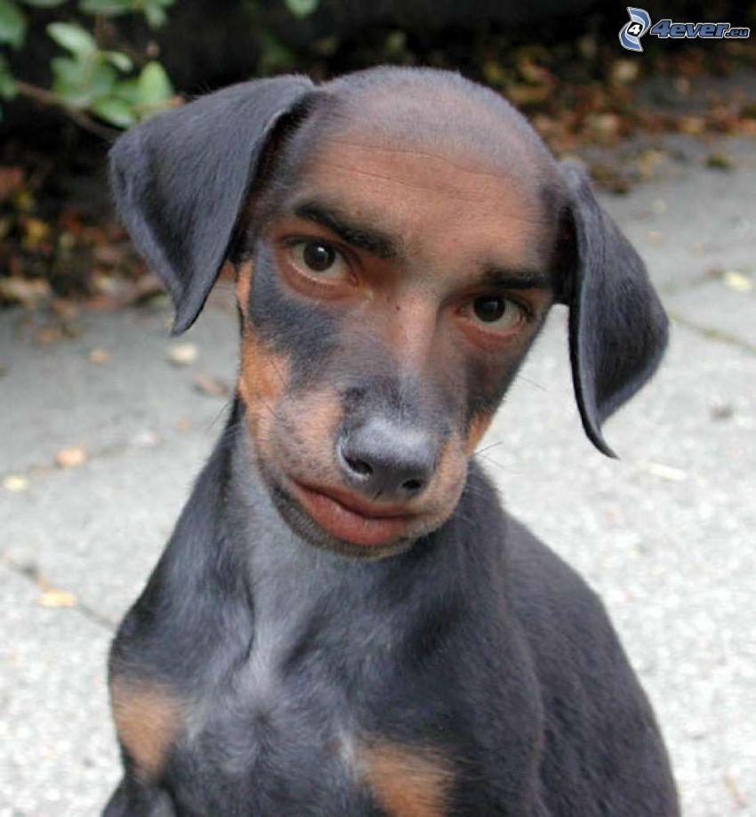 arc, férfi, kutya