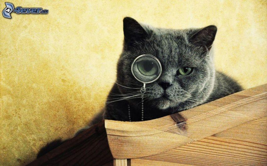 brit macska, nagyító