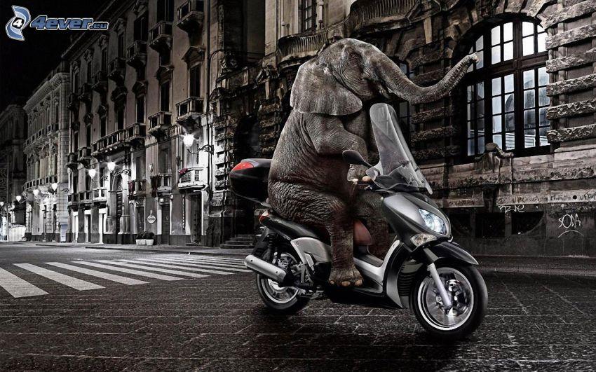 elefánt, motorkerékpár, utca, éjszaka
