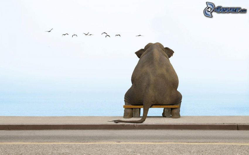 elefánt, pad, madarak