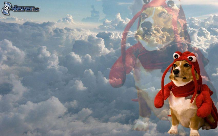 kutya, piros kosztüm, felhők