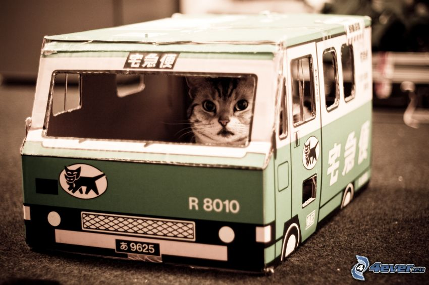 macska, autó