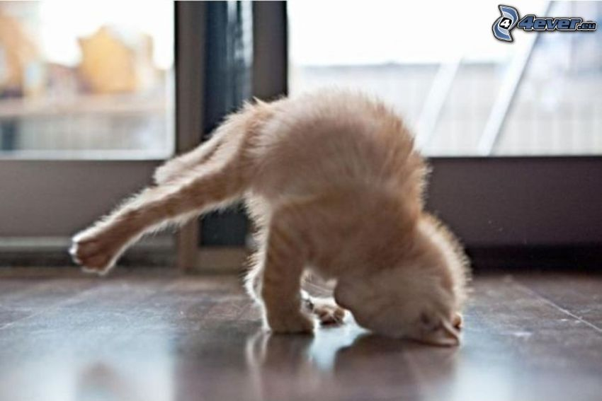 macska, breakdance, kézenállás