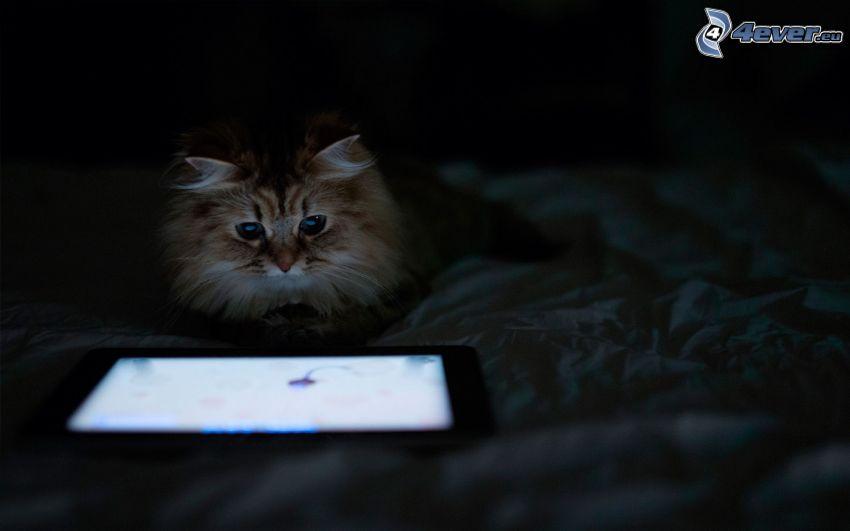 macska, tablet