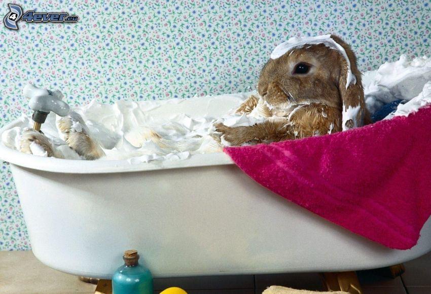 nyuszi, kád, hab, fürdő