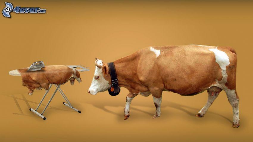 tehén, bőr, vasalódeszka, vasaló
