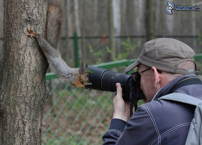 mókus, fényképezkedés, fényképész