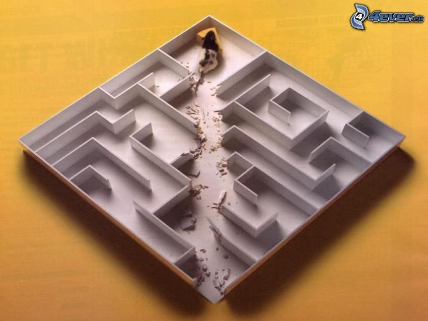 labirintus, egér