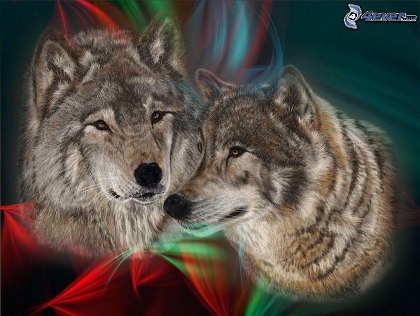 farkas és nősténye, rajzolt farkasok