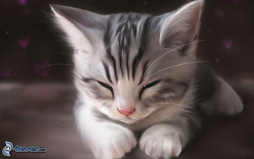 feketefehér cica