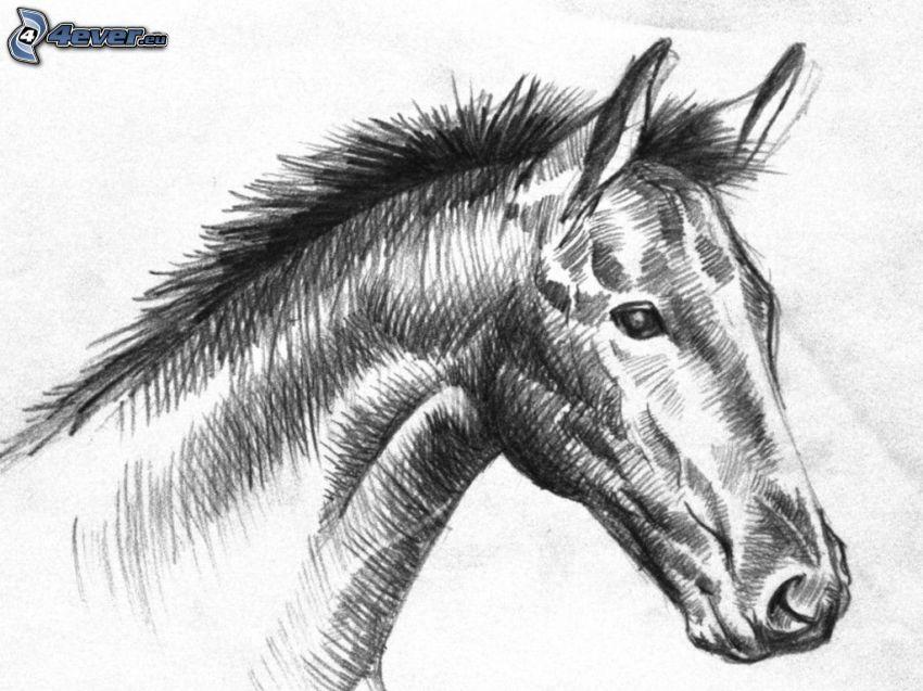 ló, fekete-fehér