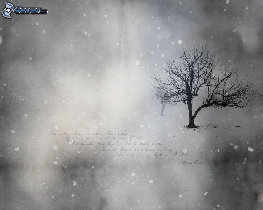 magányos fa, hóesés, fekete-fehér