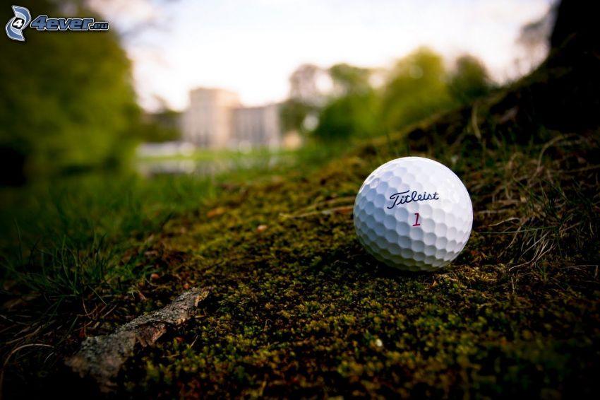 golflabda, fű, fák