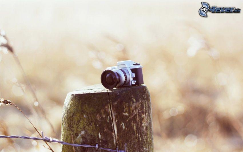 fényképezőgép, fatönk