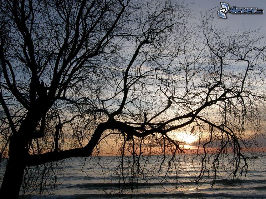 fa sziluettje, naplemente a tenger fölött