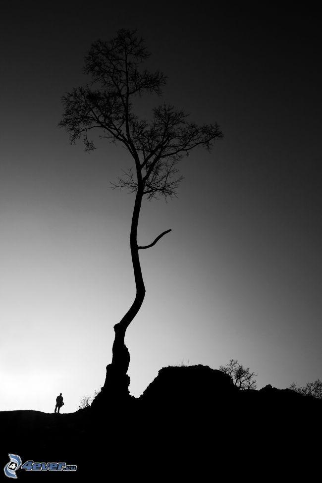 fa sziluettje