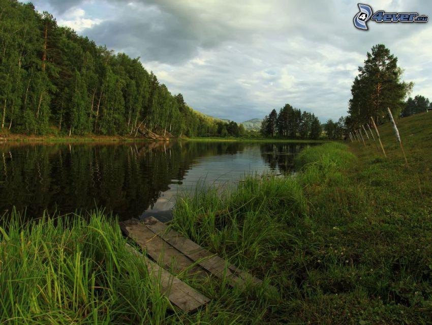 fű a tó partján, erdő, deszkák