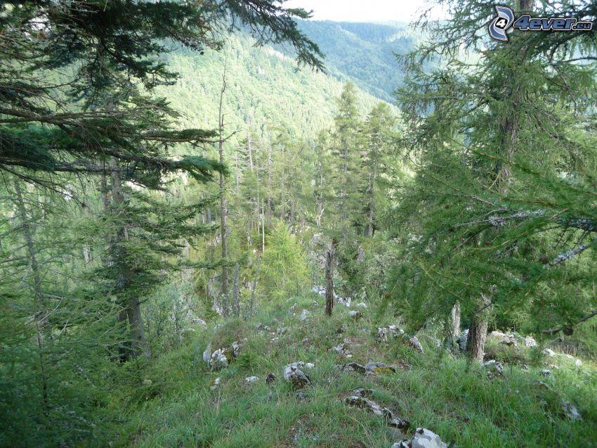 erdő, sziklák, Muránska planina, Szlovák érchegység