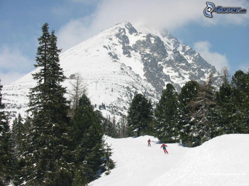 hegyek, erdő, sílécek, hó, síelők
