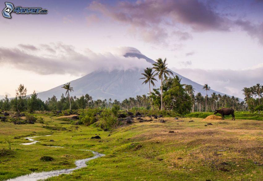 Mount Mayon, pálmafák, bivaly, patak, Fülöp-szigetek