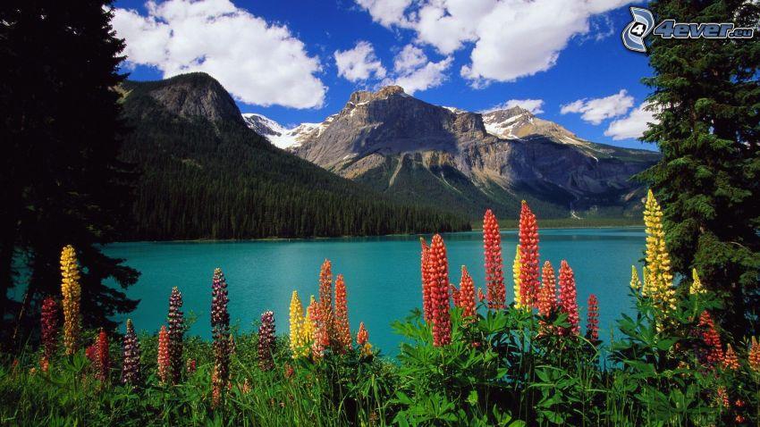 sziklás hegységek, tó, csillagfürt, narancssárga virágok