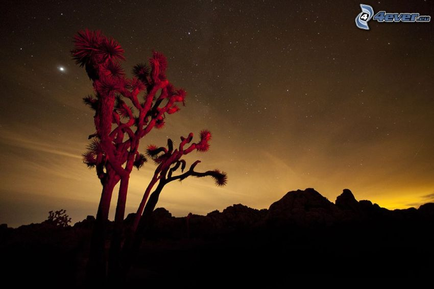 Joshua Tree National Park, fa, hegyvonulat, napnyugta után, éjjeli égbolt