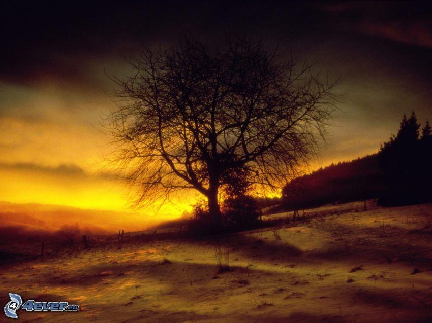 magányos fa, fa sziluettje, rét, ég