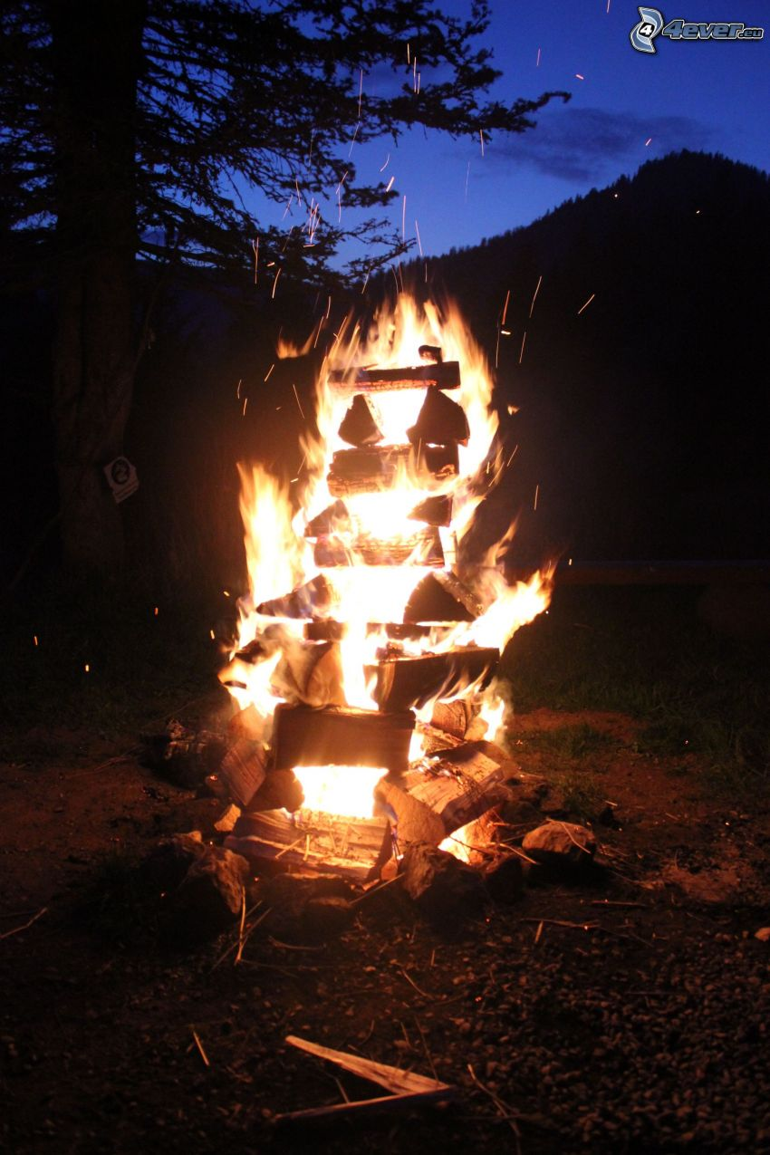 máglya, tűz, fa sziluettje