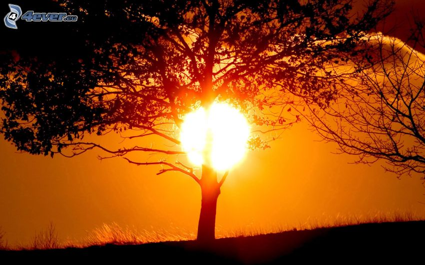 naplemente a fa mögött, fa sziluettje
