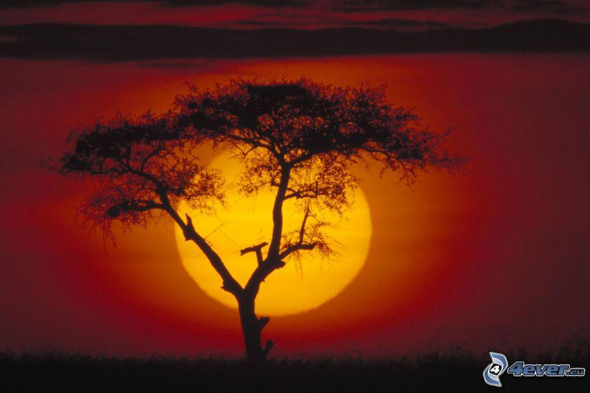 naplemente a szavannán, fa sziluettje