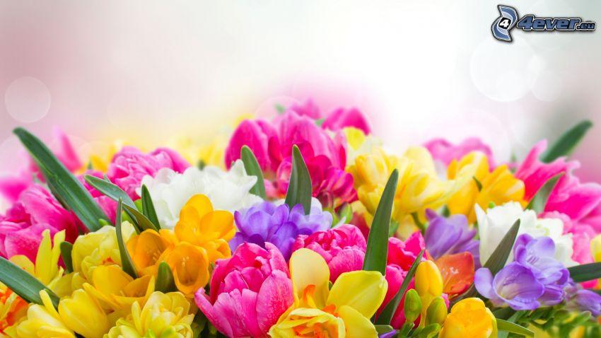 virágcsokor, mezei virágok, színes virágok