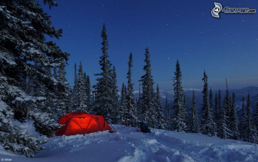 sátor, havas tűlevelű erdő, éjszaka, csillagok