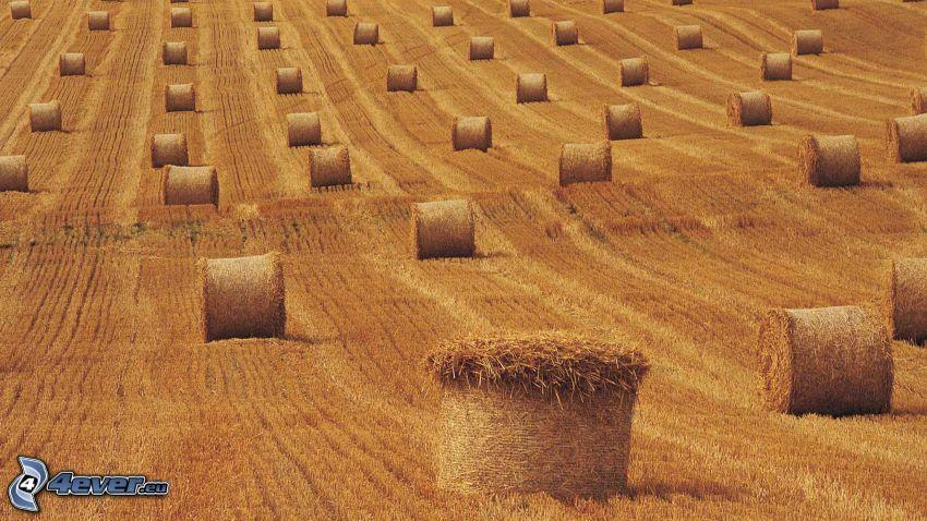 széna aratás után, mező