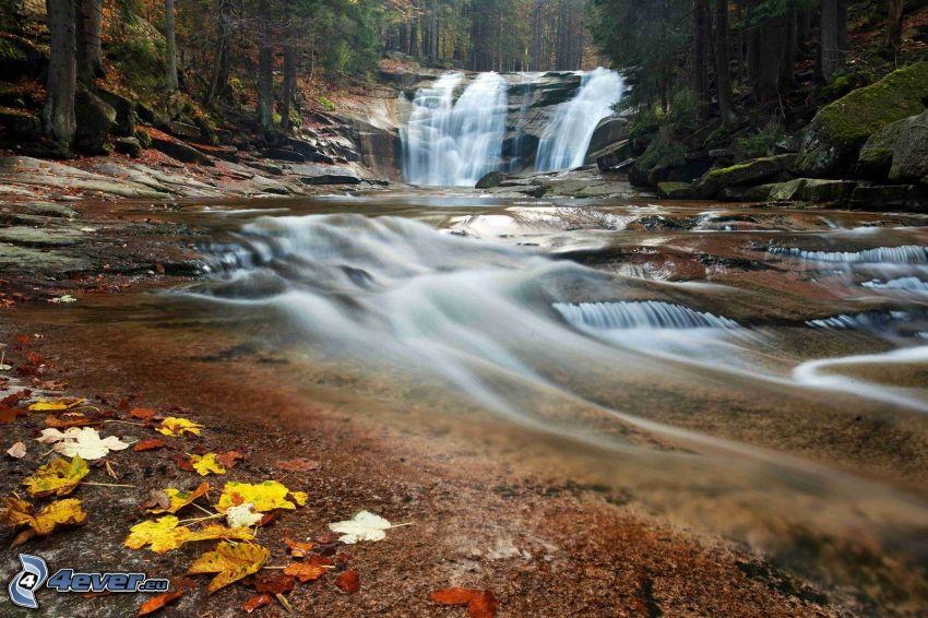 Mumlava vízesés, folyó az erdőben, őszi levelek