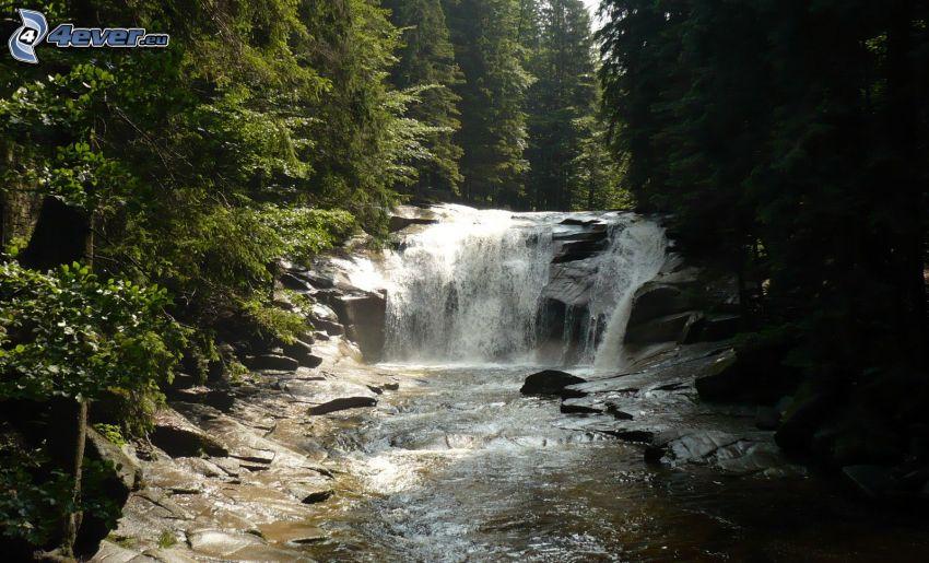 Mumlava vízesés, folyó az erdőben