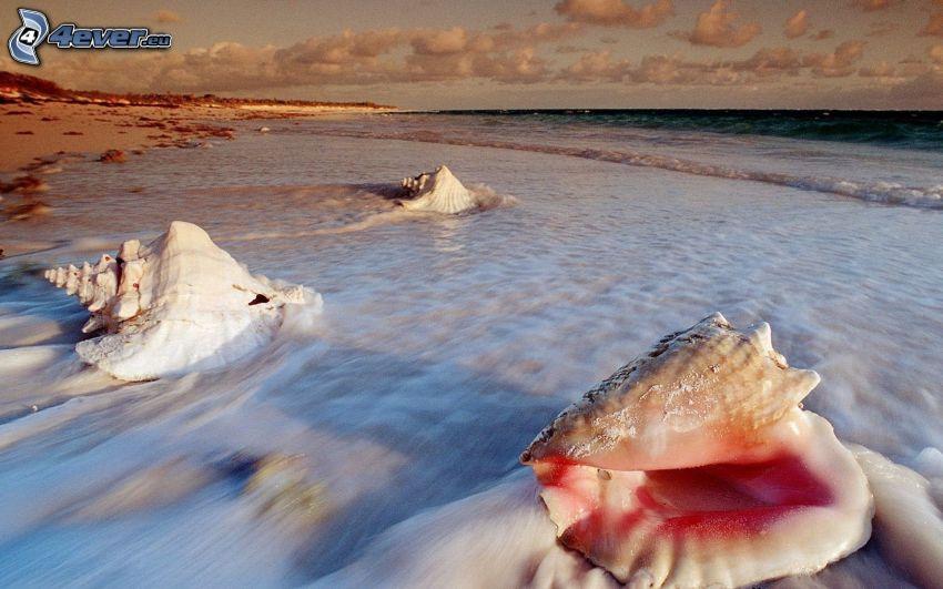 kagylók, tenger