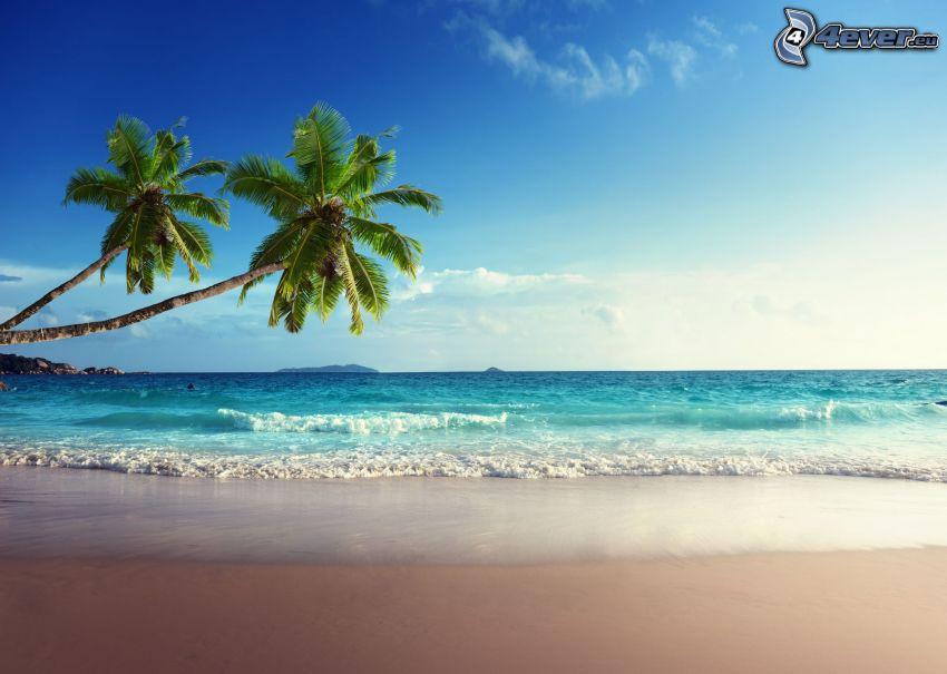 nyílt tenger, pálmafák, homokos tengerpart