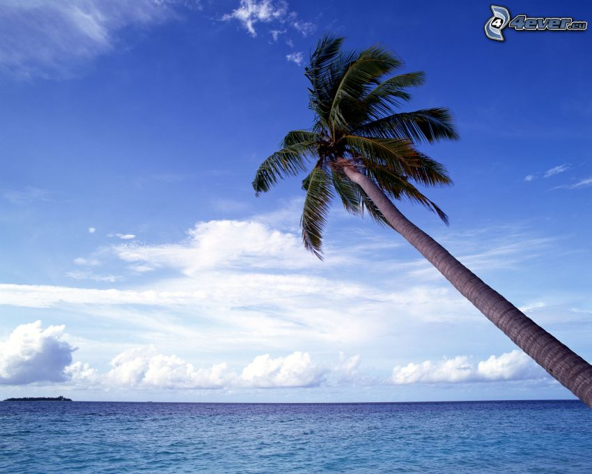pálmafa tenger felett, óceán, felhők, sziget