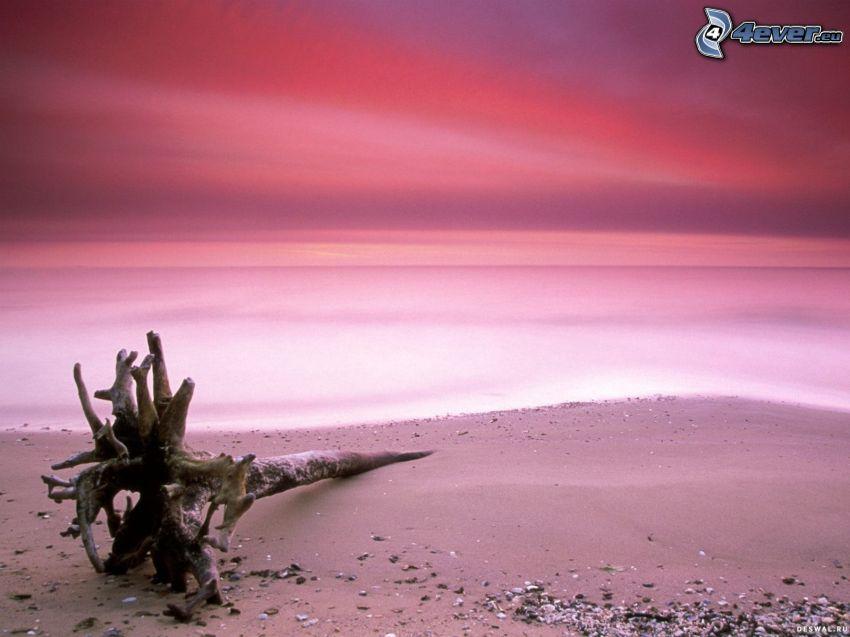 száraz törzs, homok, kövek, strand, rózsaszín ég