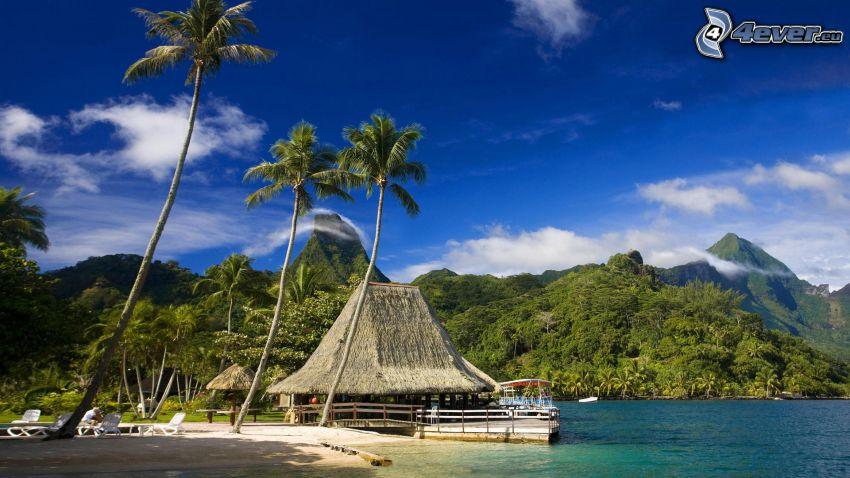 Tahiti, házikó, pálmafák