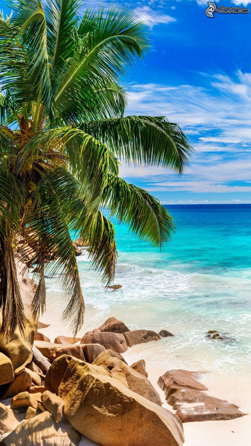 tengerpart, sziklák, pálmafa, nyílt tenger